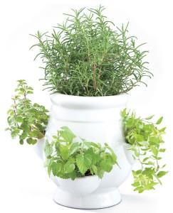 Indoor potted herbs