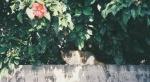 cat on a walled garden